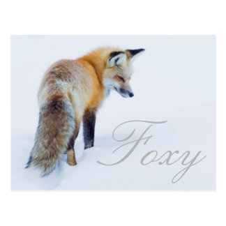 Red Fox in Winter Postcard