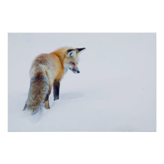 Red Fox in Winter Poster