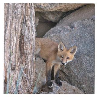 Red Fox Kit Tile