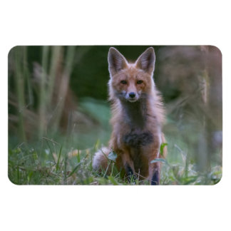 Red Fox Large Photo Magnet
