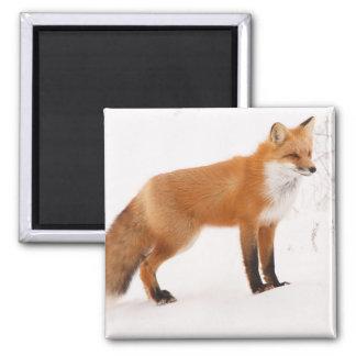 Red Fox Nature Wildlife Magnet