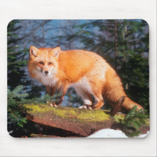 Red Fox on a log Mouse Pad