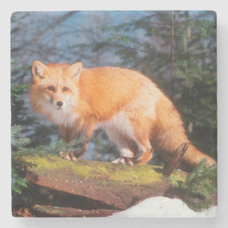 Red Fox on a log Stone Coaster