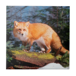 Red Fox on a log Tile