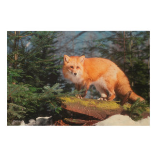 Red Fox on a log Wood Canvas