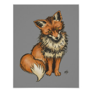 Red Fox on Grey background Poster
