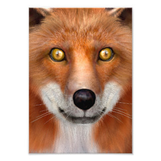 Red Fox Photo Art