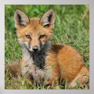 Red Fox Pretty full rez, By Angel Cher Poster