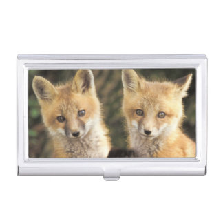 Red Fox pup in front of den Vulpes vulpes) Business Card Cases