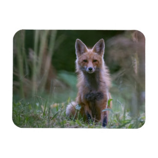 Red Fox Small Magnet