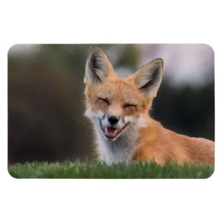Red Fox Smiling Large Photo Magnet