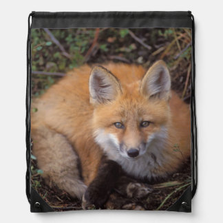 red fox, Vulpes vulpes, in fall colors along Drawstring Bags