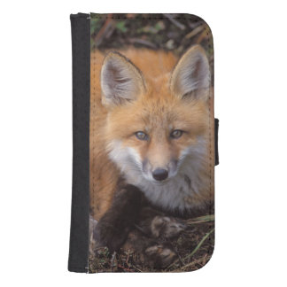 red fox, Vulpes vulpes, in fall colors along Samsung S4 Wallet Case