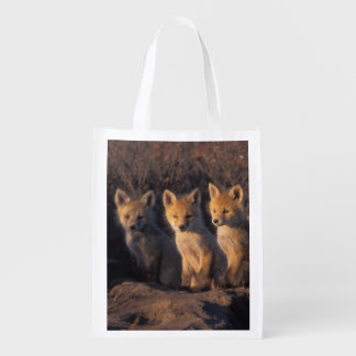 red fox, Vulpes vulpes, kits outside their Grocery Bags