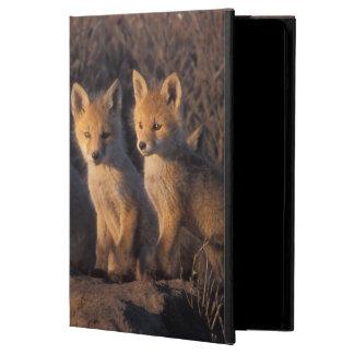 red fox, Vulpes vulpes, kits outside their iPad Air Cases