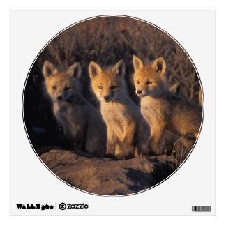 red fox, Vulpes vulpes, kits outside their Wall Sticker