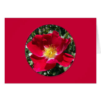 Red / Fuchsia rose Card