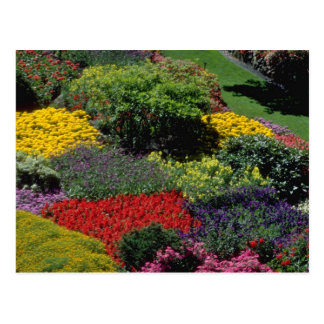Red Garden setting flowers Postcard