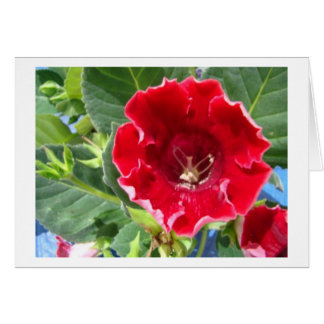 Red Geranium, Beautiful Friend Card