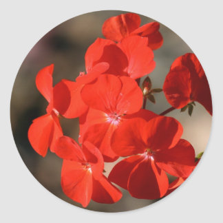 Red Geranium Flower Classic Round Sticker