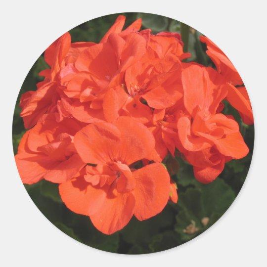 red geranium sticker