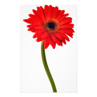 Red  Gerber Daisy Flowers Floral Daisies Flower Personalized Stationery