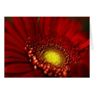 Red Gerbera Daisy Card