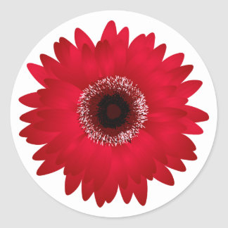 Red Gerbera Daisy Classic Round Sticker