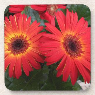Red Gerbera Daisy Flowers Coaster