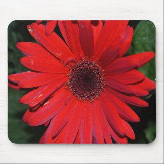 Red Gerbera Daisy Mousepad