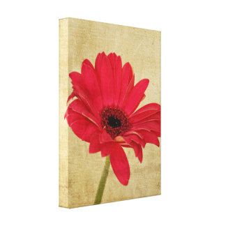Red Gerbera Flower Canvas Stretched Canvas Prints