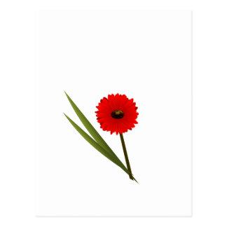 Red Gerbera Flower Clipart Post Card