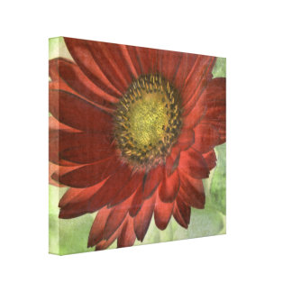 Red Gerbera Gallery Wrap Canvas