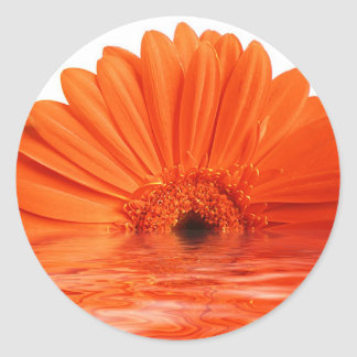 red gerbera round sticker