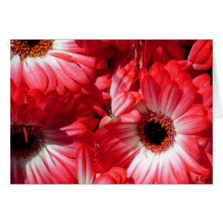 Red Gerberas Greeting Card