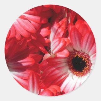 Red Gerberas Round Sticker