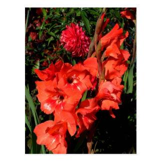 Red Gladiolas Postcard