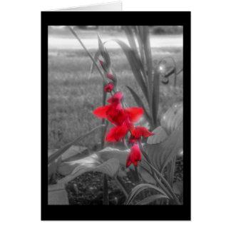 Red Gladioli Card