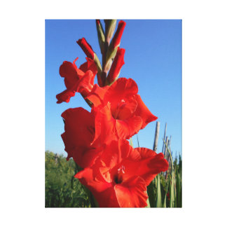 Red Gladiolus And The Blue Sky Canvas Print