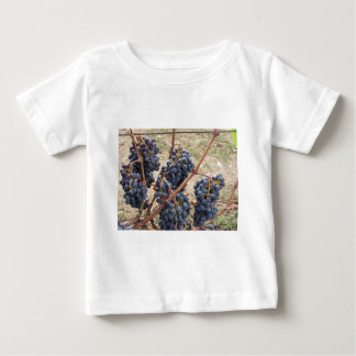 Red grapes on the vine . Tuscany, Italy Baby T-Shirt