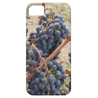 Red grapes on the vine . Tuscany, Italy Case For The iPhone 5