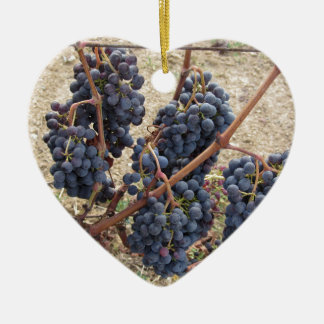 Red grapes on the vine . Tuscany, Italy Ceramic Heart Ornament