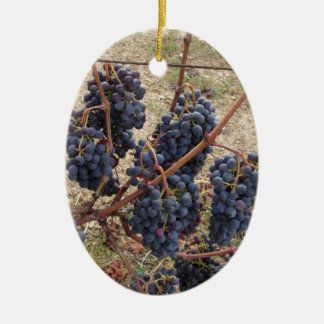 Red grapes on the vine . Tuscany, Italy Ceramic Oval Ornament