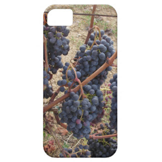 Red grapes on the vine . Tuscany, Italy iPhone 5 Covers