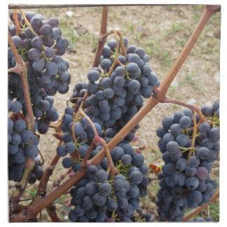 Red grapes on the vine . Tuscany, Italy Napkin