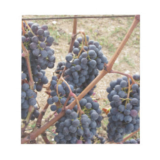 Red grapes on the vine . Tuscany, Italy Notepad