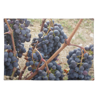 Red grapes on the vine . Tuscany, Italy Placemat