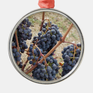 Red grapes on the vine . Tuscany, Italy Silver-Colored Round Ornament