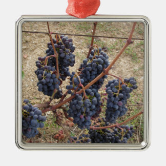 Red grapes on the vine . Tuscany, Italy Silver-Colored Square Ornament
