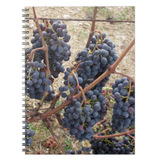 Red grapes on the vine . Tuscany, Italy Spiral Notebooks